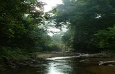 hutan simpan ulu muda